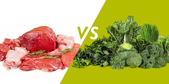 animal vs plant collagen